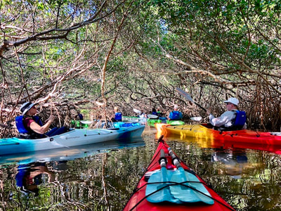mangrove kayaking st petersburg, fl