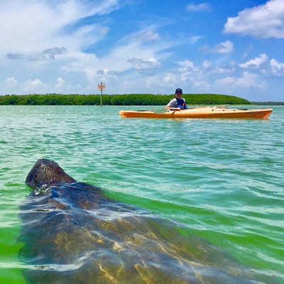 manatees st pete beach