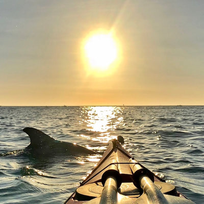 sunset dolphin tours