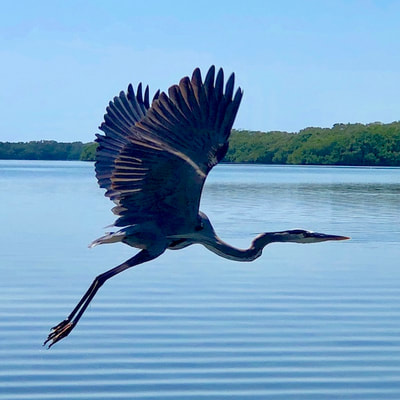 wildlife photography florida