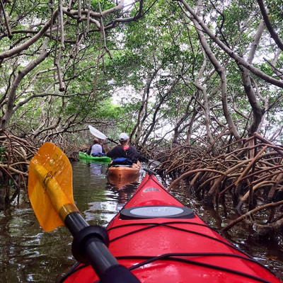 mangrove tours florida